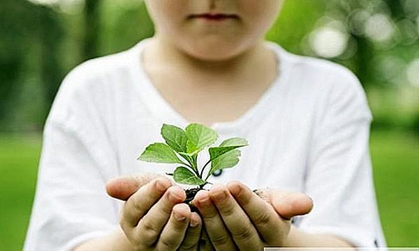 Ядовитые растения: опасность отравления для детей (ядовитые растения в доме и саду)