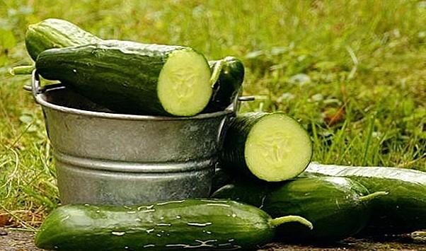 Огурцы: низкокалорийный продукт для похудения