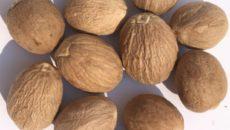 Мускатный орех польза и вред для здоровья. Виды применения.