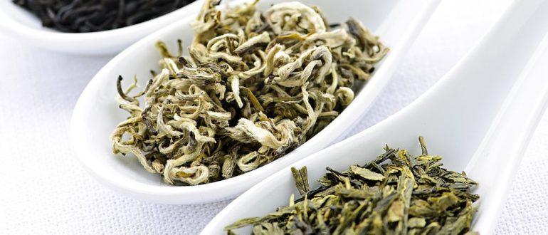 Черный, белый или зеленый чай-какой наиболее полезен для здоровья?